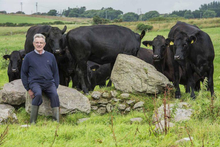 Een kijkje in het leven van onze runderen